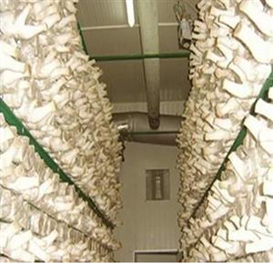 云南食用菌冷保鲜冷库安装工程