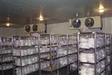 中小型比泽尔制冷机组冷冻冷藏库