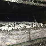 德州食用菌养殖中央空调机组