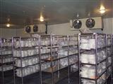 冷库设计安装,保鲜冷库,冷冻冷库安装