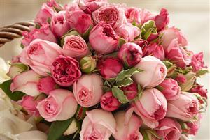 鲜花冷库_植物花卉冷藏保鲜库_运城花卉冷库安装